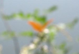 mariposa cortada